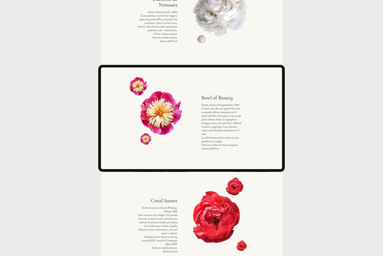 giardini-visconte-website-thebear-graphic-flowers